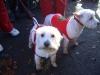 Santa Dash 20097