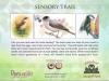 6 Bird Feeder
