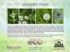 7 Wild flower meadow