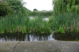 Flooded Bog Garden