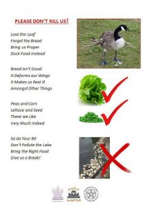 duck-poem-2